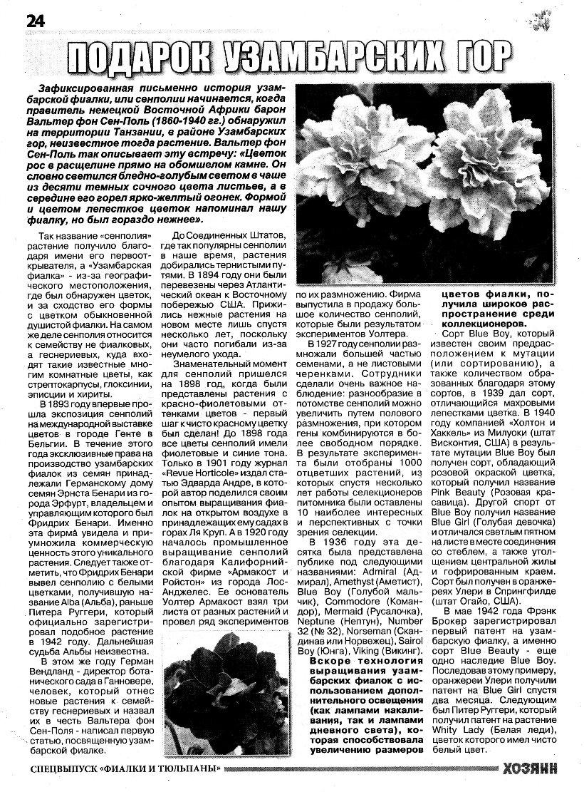узамбарская фиалка или сенполия B74412ea3581