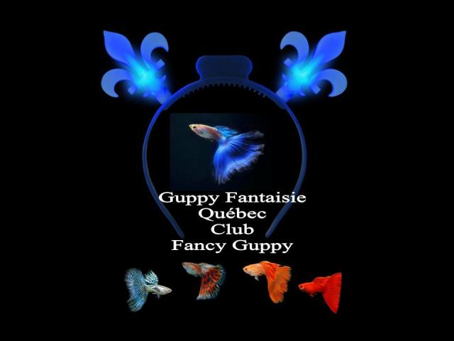 Fancy-Guppy