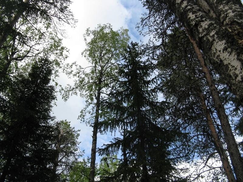 Карелия,край лесов и озёр 059