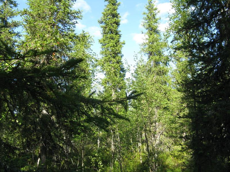 Карелия,край лесов и озёр 035