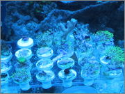A few Frags for Trade IMG_0044