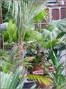 Léto na zahradě DSCF0880