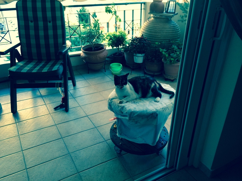 Κάρι, μια υπέροχη γατούλα και τα 4 μωράκια της - Σελίδα 9 Image