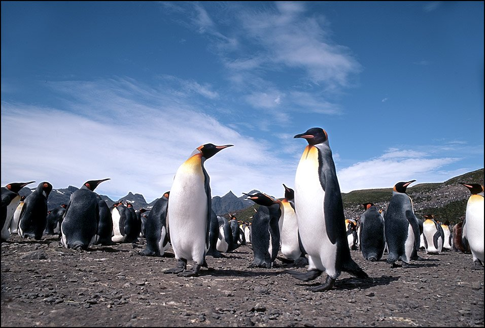 Pingvini - Page 3 497kts8xt5a