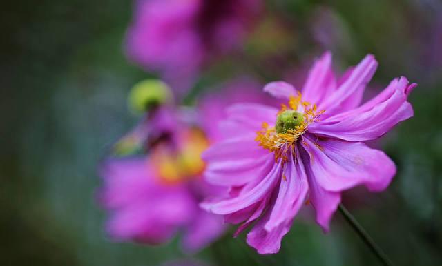 Fotografije cvijeća - Page 15 11021218_808094612593703_1334096689240835028_n