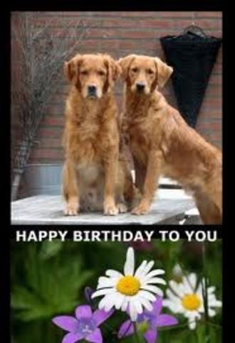 HAPPY BIRTHDAY THREAD - Page 2 COOPER_AND_FRIEND_GRATULATE_b