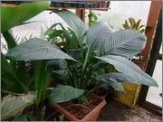 Určení druhu rostliny DSCF0055