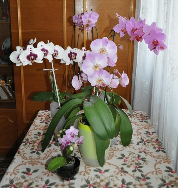 Flori si gradini - Pagina 32 DSC_7033_1