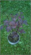 Určení druhu rostliny - Stránka 3 073