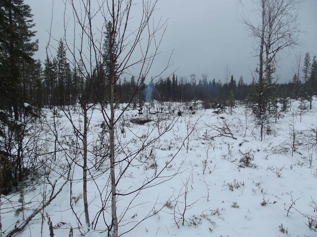 Зимний пейзаж DSCF2541