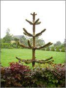 rostliny v Anglii - inspirace P5310152