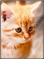 \\KITTEN SEARCH\\ SNOW X GLOW - Pagina 2 Kitten_ava