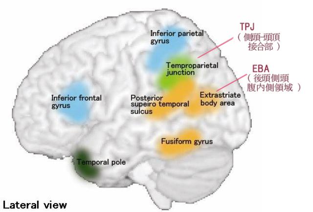 体外離脱(続・視覚について)1.『脳の中の身体地図』サンドラ&マシュー・ブレイクスリー EBA_out