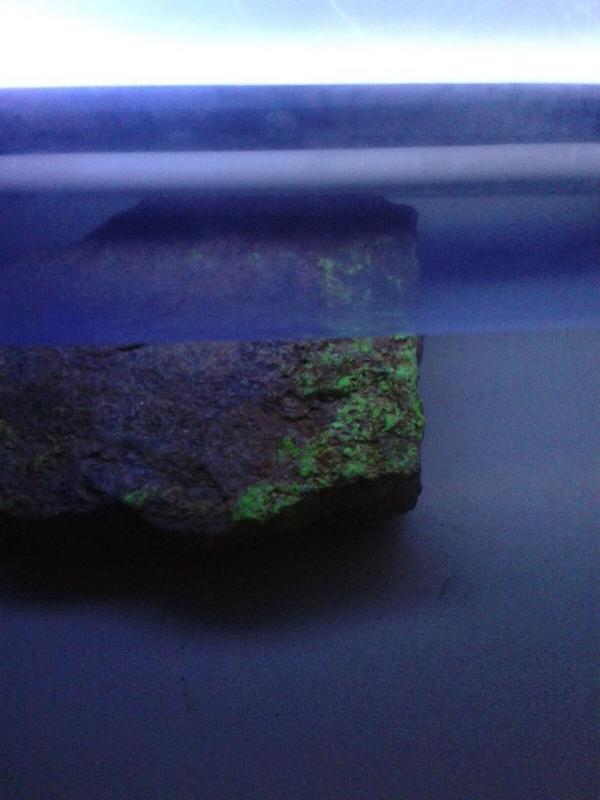 Fluorescencia temporal en lamparas SHP Efecto_anilandro_3