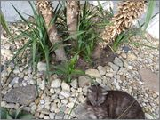 Mrazuodolné juky - rod Yucca - Stránka 6 31_5_1015_4