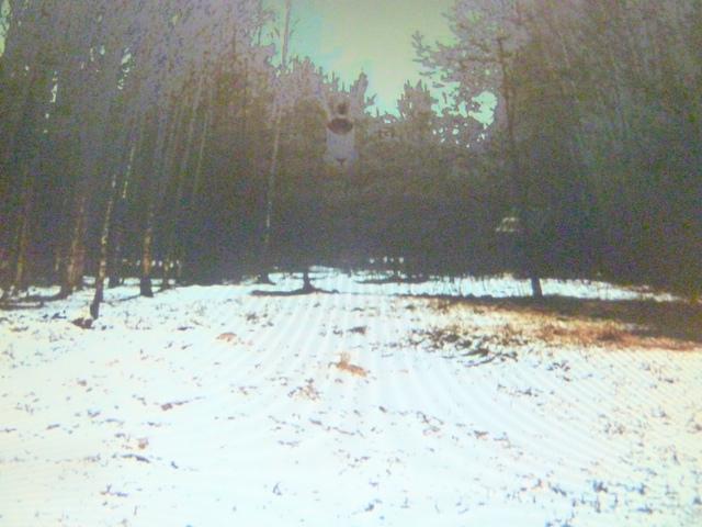 Boar cam Winter 2014-2015 - Page 11 Eend_op_feedingground_2015_04_02