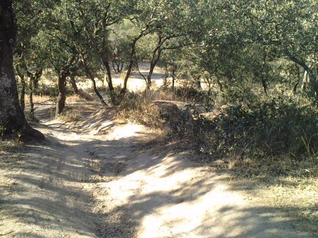 ¿Motor trasero o delantero? Casa de Campo de Madrid y ciclismo. - Página 2 Image