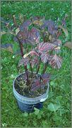 Určení druhu rostliny - Stránka 3 075