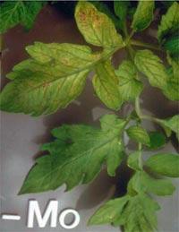 Nutrição de Plantas Aquaticas: Função, Deficiência e Fertilização. Nutricao_vegetal_14