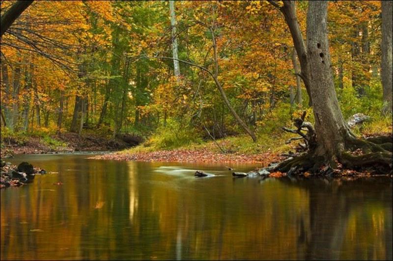 Fotografija dana - Page 5 Autumn_forest_green_river_Favim_com_825152
