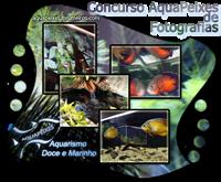 [Concurso] 11º Concurso AquaPeixes de Fotografias - Hora da Refeição  Banner_sem_fundo_edit
