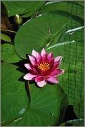 Léto na zahradě - Stránka 2 DSC_0005