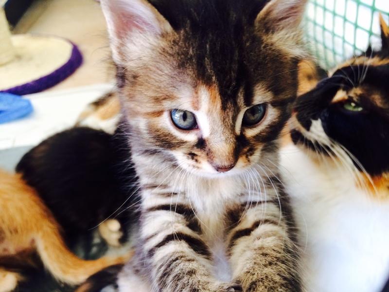Κάρι, μια υπέροχη γατούλα και τα 4 μωράκια της - Σελίδα 3 Foibi_6