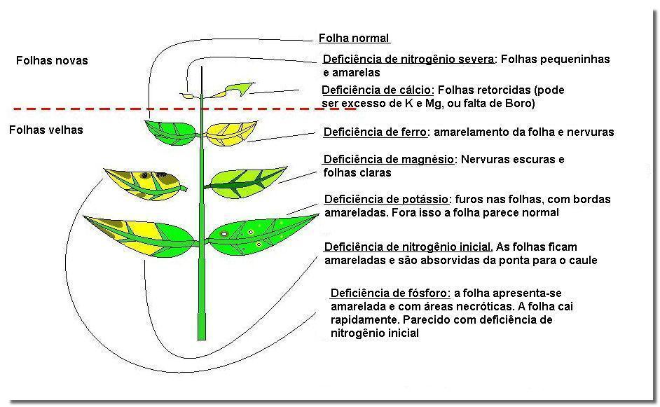 Nutrição de Plantas Aquaticas: Função, Deficiência e Fertilização. Esquemadeficiencias2