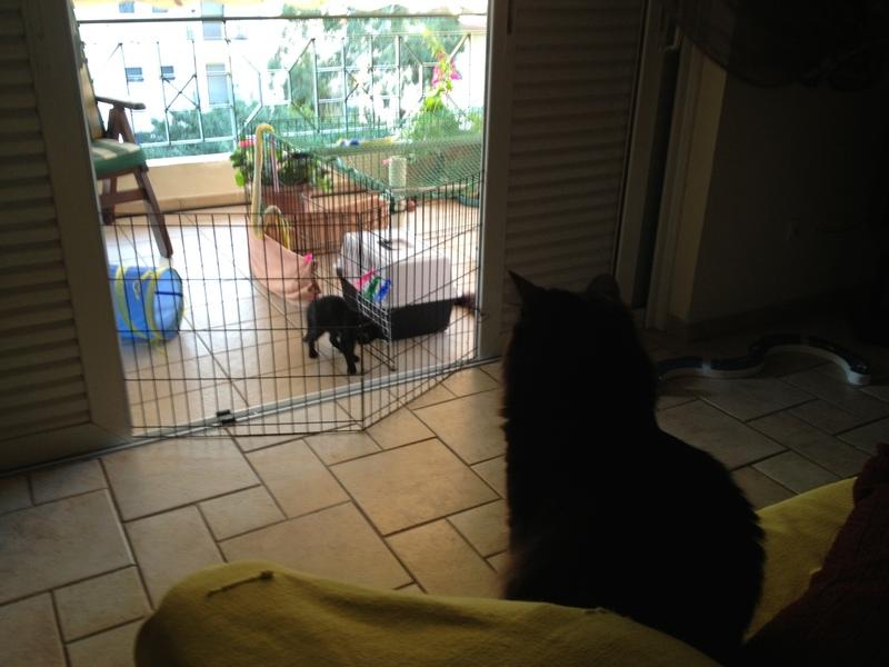 Πανθηράκος 2,5 μηνών αναζητάει την οικογένειά του Mailo_Kira_010