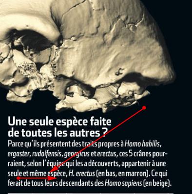 fossiles de Damnisi Boulverse l'évolution Image