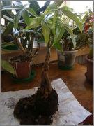 Pomoc při zařazení rostliny P2132095