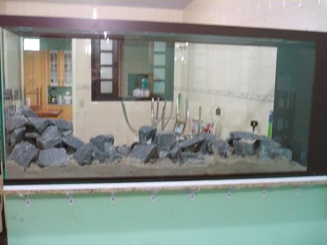 Meu novo aquário. P1060812