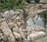 Mrazuodolné juky - rod Yucca - Stránka 2 IMG_2000