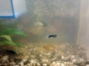Problemillas con mi acuario. Qué debo hacer?? 2012_01_02_16_09_53