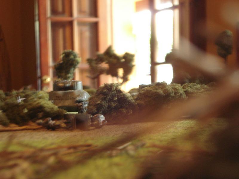 Asalto aliado en los setos DSC00977
