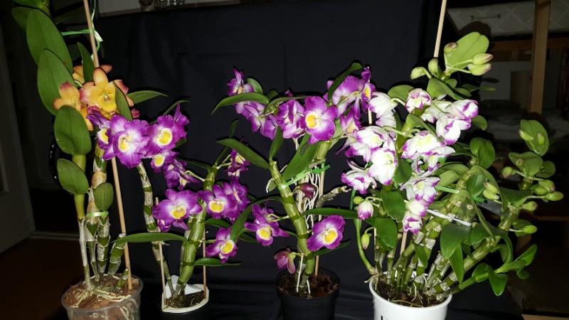 Orchideen 3 (fortlaufende Seiten 300 bis 400) - Seite 4 20180201_071815