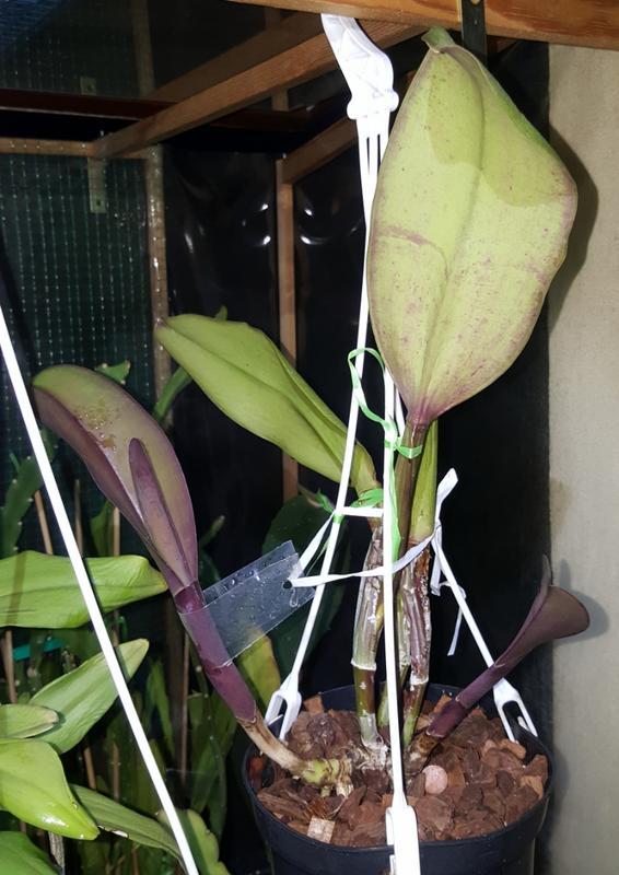 Orchideen-Neuzugang 2 - Seite 4 20180710_223316