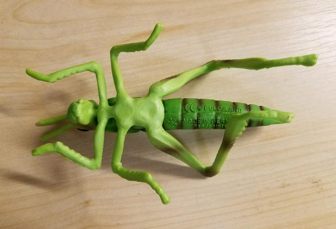 Grasshopper (Bullyland) 20180217_074640