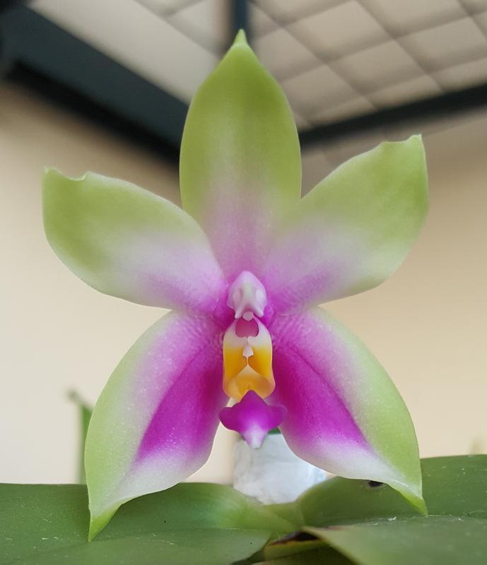 Orchideen 3 (fortlaufende Seiten 300 bis 400) - Seite 30 20180801_192902