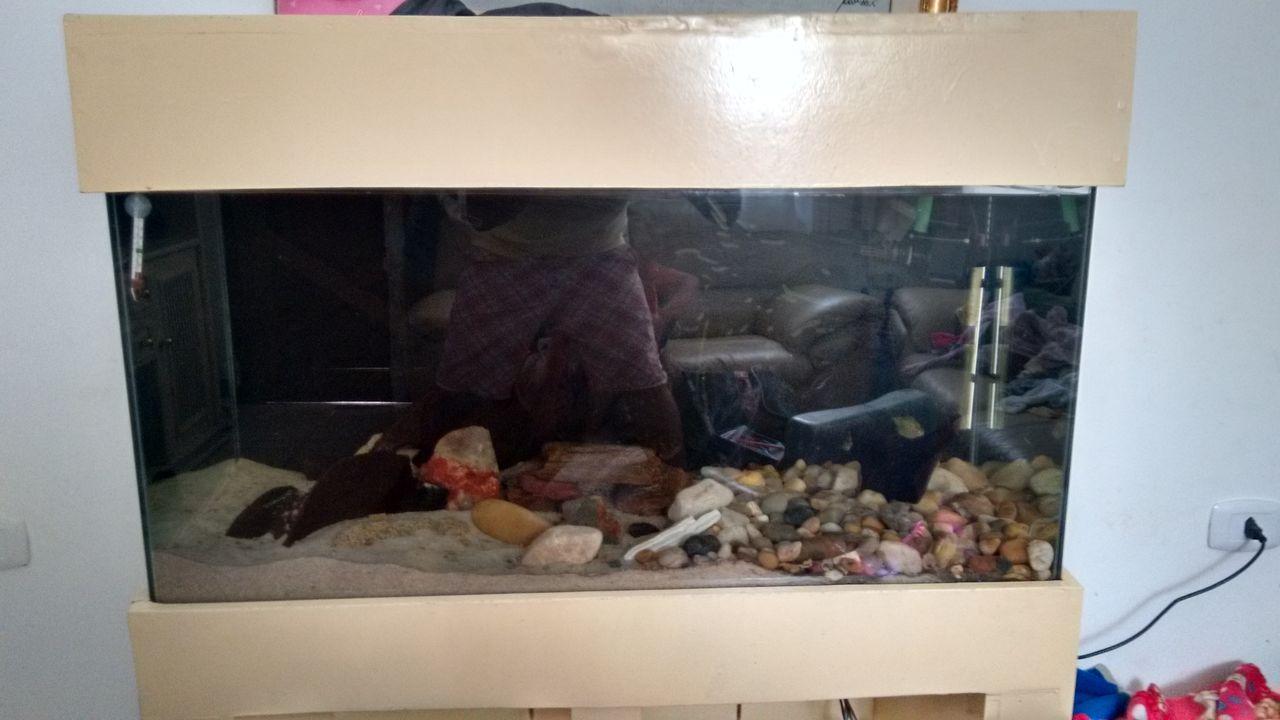 Meu aquário IMG_20150919_143108165_HDR
