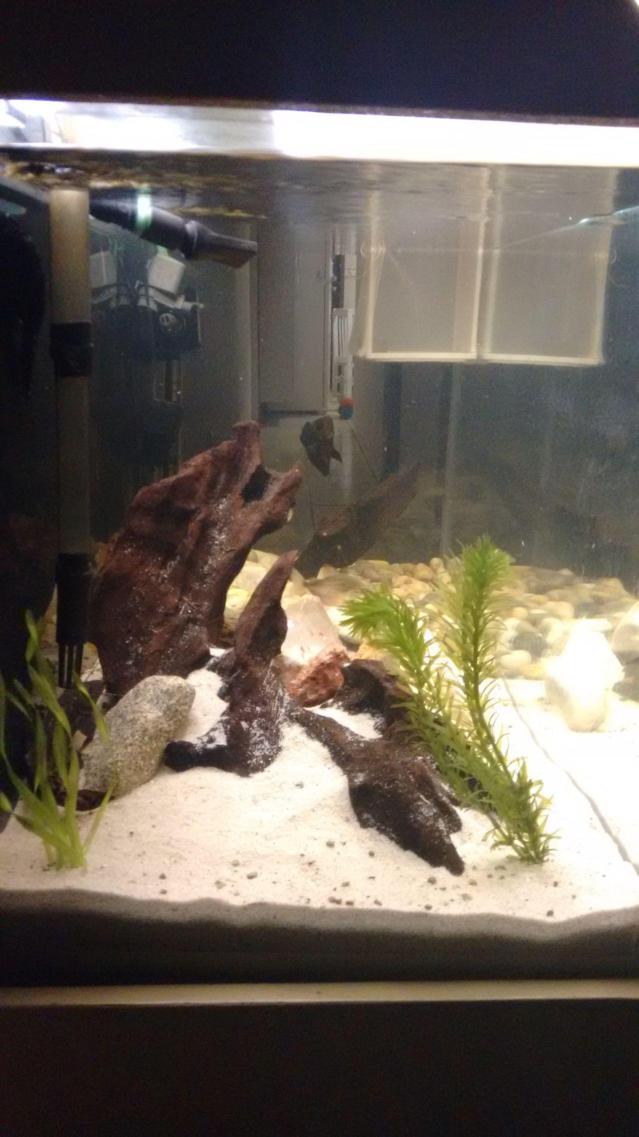 Meu aquário IMG_20150920_195110379