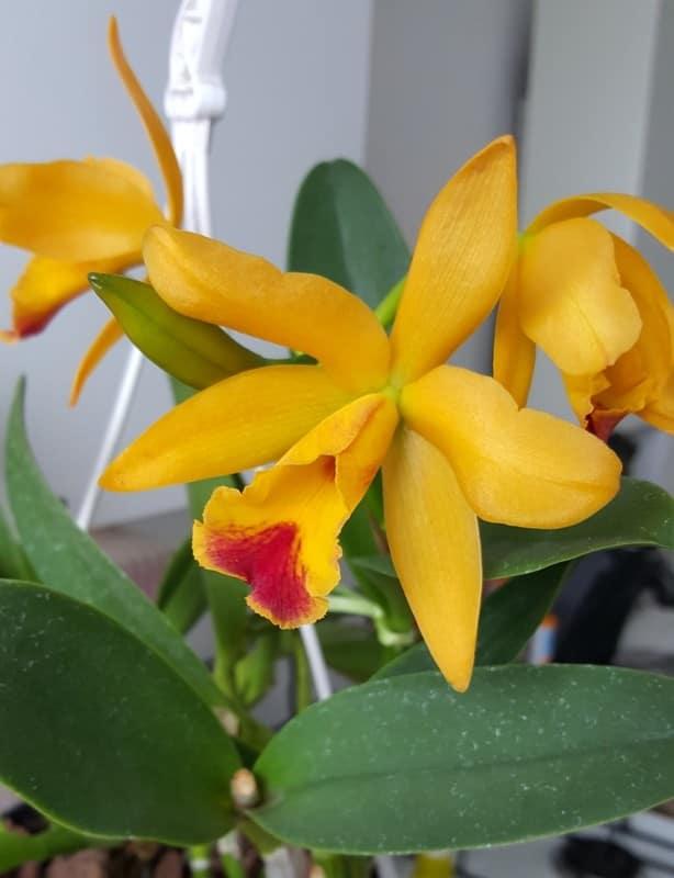 Orchideen 2 (fortlaufende Seiten 200 bis 300) - Seite 51 20170120_124955