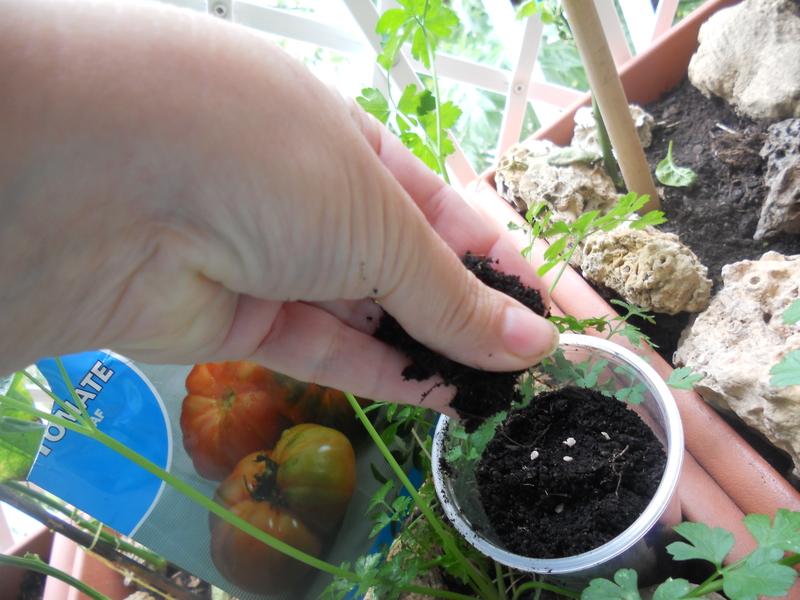 Forma sencilla de hacer los semilleros  para nuestro maceto huerto 013