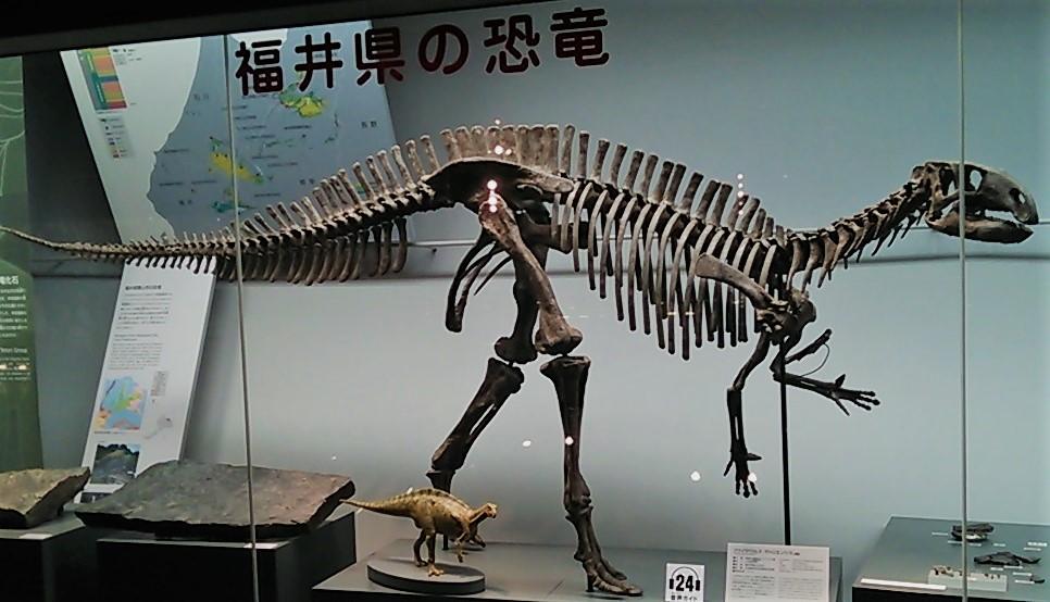 Kinto Favorite - Fukuisaurus - walkaround Fukui_Prefectural_dinosaur_museum