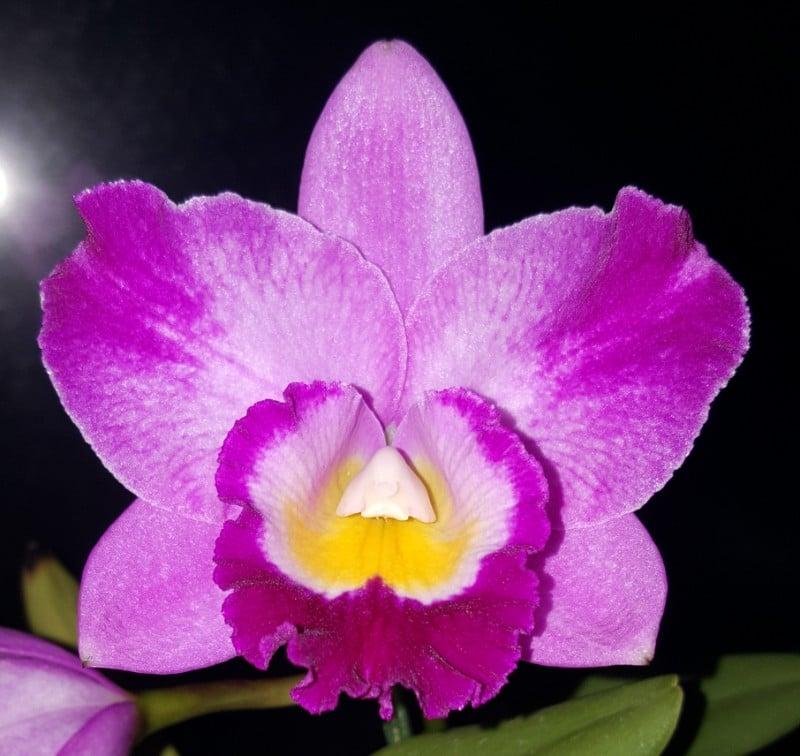 Orchideen 2 (fortlaufende Seiten 200 bis 300) - Seite 51 20170129_220102