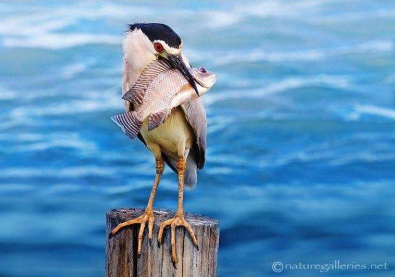 Thế giới động vật sống động Image