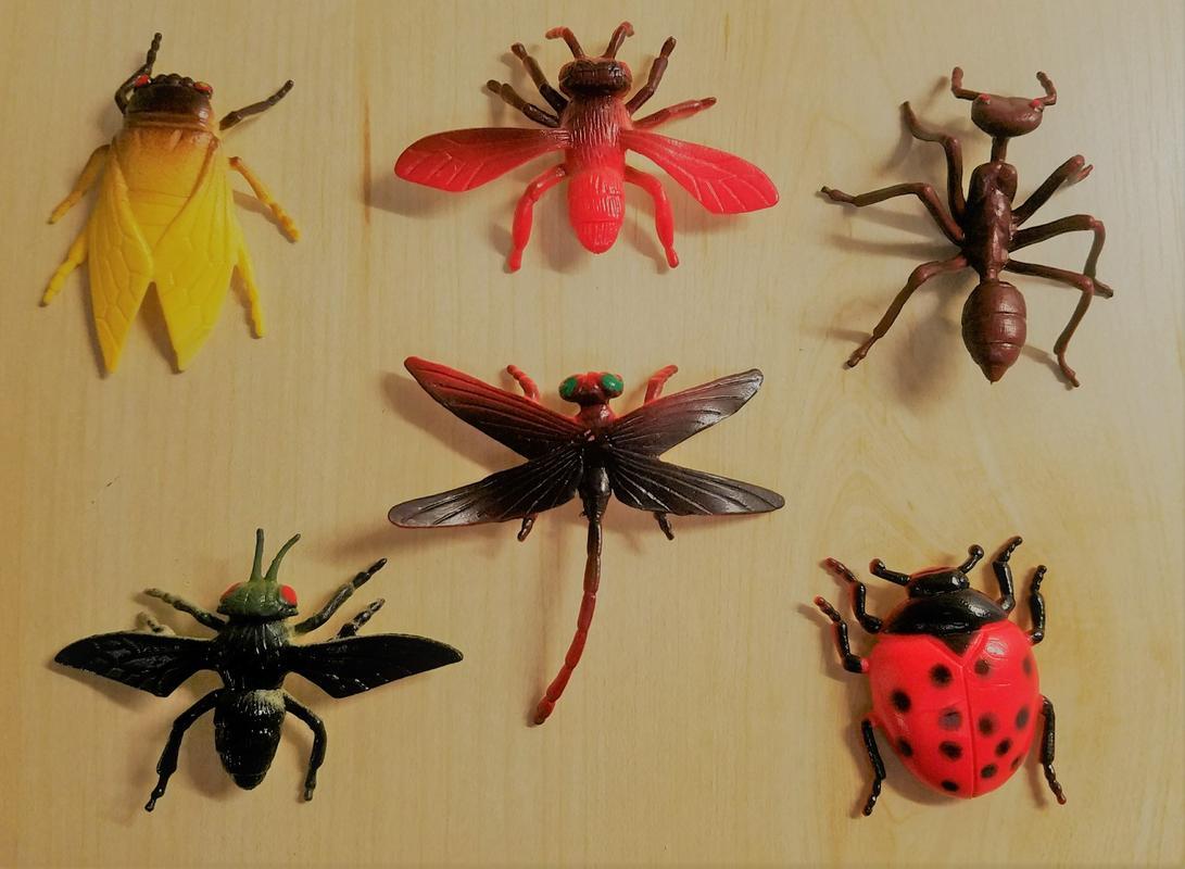 Insect World (Battat Terra) 20180110_173733