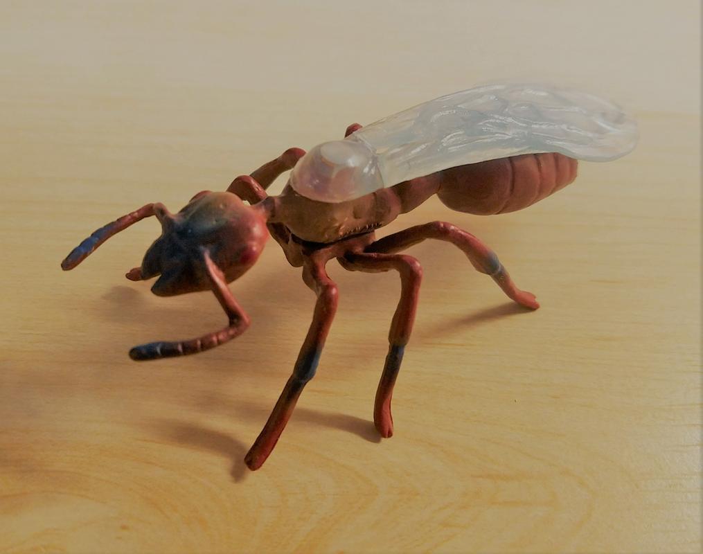 Ant, male (Bullyland) 20180219_155507