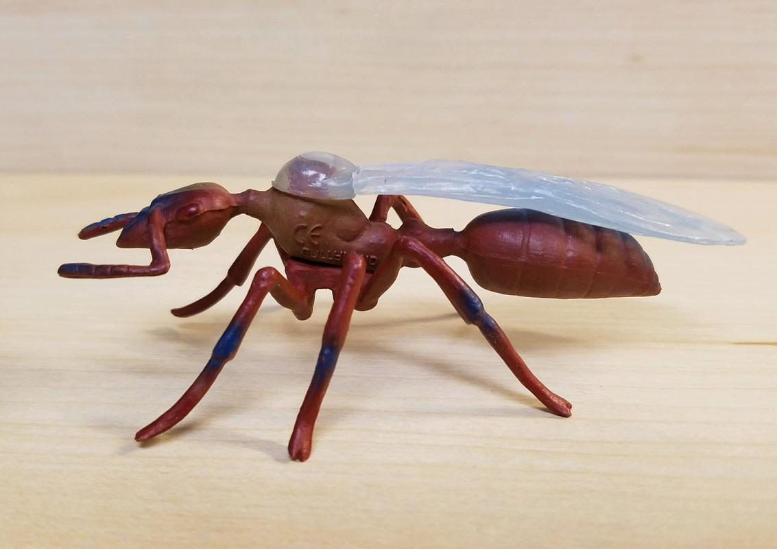 Ant, male (Bullyland) 20180219_155518