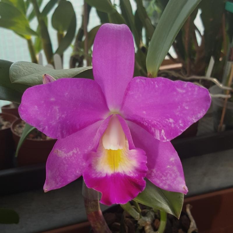 Orchideen 3 (fortlaufende Seiten 300 bis 400) - Seite 30 20180716_182142